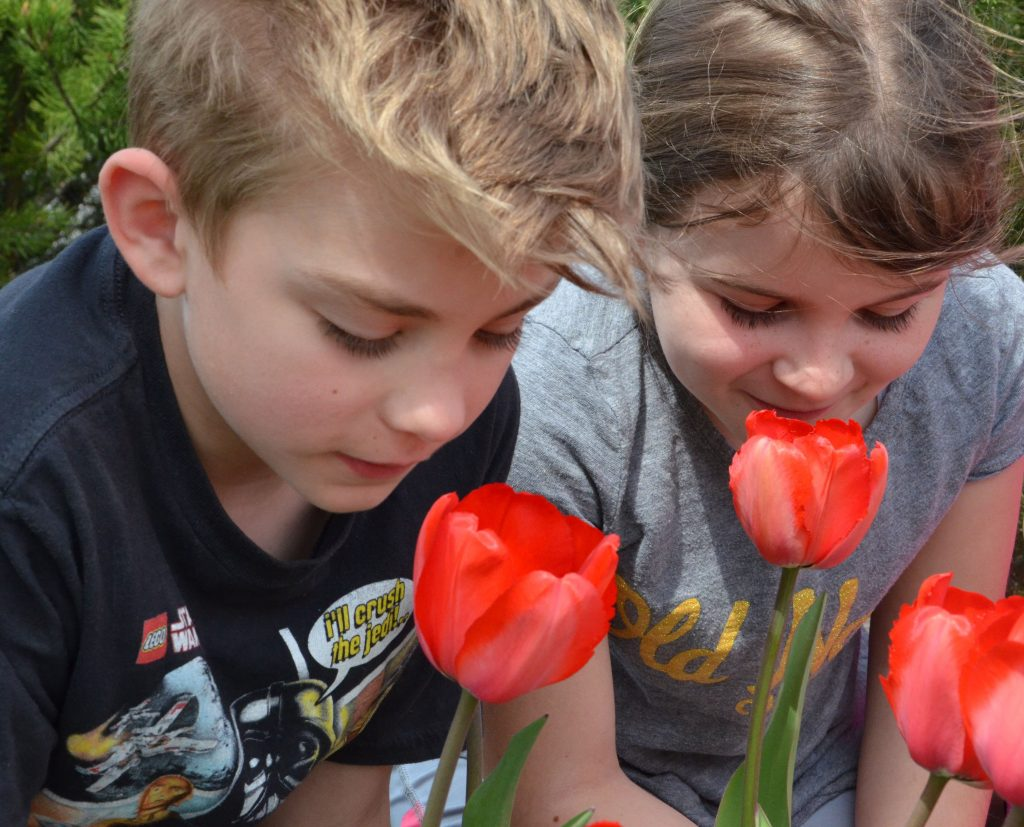 An image of two students sniffing tulips