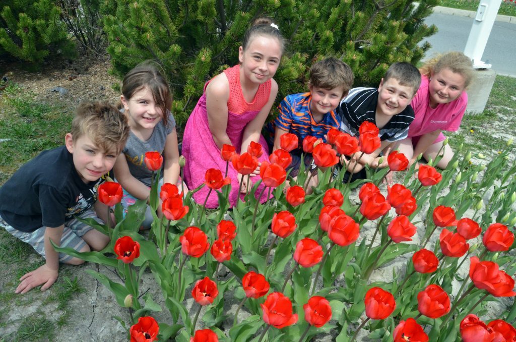 An image of students in front of a tulip garden